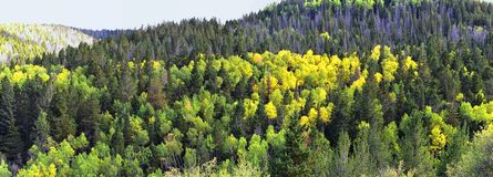 Late Summer early Fall panorama forest views hiking through trees in Indian Canyon, Nine-Mile Canyon Loop between Duchesne and Pri royalty free stock image