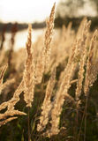 Late summer field grass Stock Image