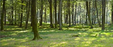 Late summer in forest Stock Photos