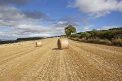 Late summer harvest Stock Photos