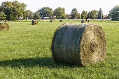 Late Summer hay bales in a green pasture and field I Royalty Free Stock Photography
