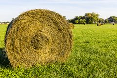 Late Summer hay bales in a green pasture and field II Royalty Free Stock Photography