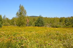 Late summer landscape. Bromont Quebec Canada royalty free stock photo