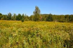 Late summer landscape. Bromont Quebec Canada stock image