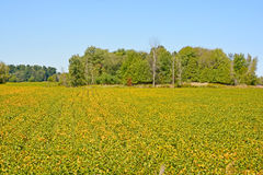 Late summer landscape. Bromont Quebec Canada stock images