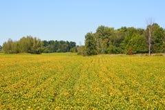 Late summer landscape. Bromont Quebec Canada stock photos