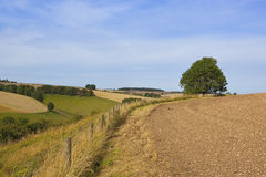 Late summer landscape Royalty Free Stock Image