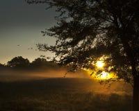 Late summer morning sunrise or sunset background Royalty Free Stock Photo