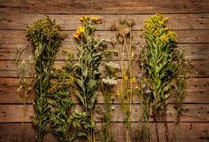 Late summer natural meadow flowers and plants on vintage wooden background Royalty Free Stock Image
