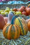 Late summer is pumpkin time. Pumpkins in all colors and shapes royalty free stock image