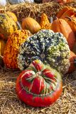 Late summer is pumpkin time. Pumpkins in all colors and shapes stock images