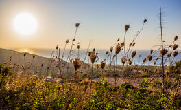 Late summer scene of sea sunset. With plants on foreground stock photo