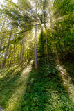 Late summer sunlight breaking through the trees at a mystical lane Royalty Free Stock Photo