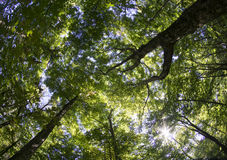 Late Summer Tree Canopy Shot With Fish Eye Lens Royalty Free Stock Photos