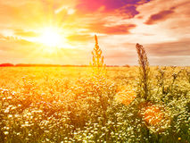 Late sunset on the summer meadow Stock Image