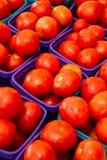 Late Tomatoes Stock Photo