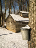 Maple Sugaring Season - Sugar House and Pails. Late winter is maple sugaring time in Vermont, sugar maples are tapped with spouts when the sap starts to rise up royalty free stock photography