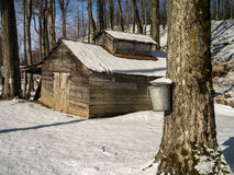 Maple Sugaring Season - Sugar House and Pails. Late winter is maple sugaring time in Vermont, sugar maples are tapped with spouts when the sap starts to rise up royalty free stock image
