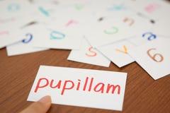 Lateinisch; Lernen des neuen Wortes mit den Alphabet-Karten; Schreiben AP stockfoto