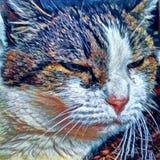 Latent katt royaltyfri illustrationer
