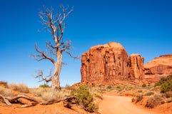 Latent träd som står fortfarande högväxt i monumentdalen Royaltyfri Bild