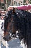 Lateral da cara do cavalo Foto de Stock