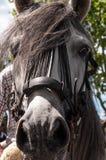 Lateral da cara do cavalo Fotografia de Stock Royalty Free