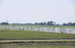 Lateral Move Irrigation System. This is a spring picture of a Lateral Move Irrigation System watering corn sprout in a field located in Rochelle, Illinois in Royalty Free Stock Photos
