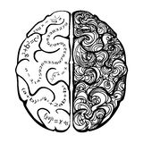 Lateralization of brain function. A left and right hemispheres top view. Creativity concept vector illustration
