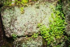 Laterite τοίχος πετρών με την αύξηση χλόης και βρύου που διαμορφώνει όμορφο κατασκευασμένο στην επιφάνεια για το υπόβαθρο Παλαιό  Στοκ Φωτογραφία