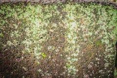 Laterite τοίχος πετρών με την αύξηση χλόης και βρύου που διαμορφώνει όμορφο κατασκευασμένο στην επιφάνεια για το υπόβαθρο Παλαιό  Στοκ Εικόνες