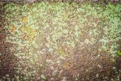 Laterite τοίχος πετρών με την αύξηση χλόης και βρύου που διαμορφώνει όμορφο κατασκευασμένο στην επιφάνεια για το υπόβαθρο Παλαιό  Στοκ Φωτογραφίες