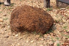 Laterite : Laterite is a soil and rock type rich in iron and aluminium and is commonly considered to have formed in hot and wet stock photos