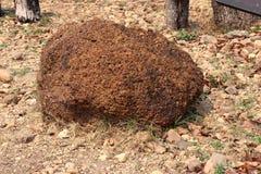 Laterite: O Laterite é um tipo ricos do solo e da rocha no ferro e no alumínio e é considerado geralmente para ter formado em que fotos de stock