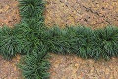 Laterite och gräsplanblad Royaltyfri Fotografi