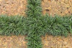 Laterite och gräsplanblad Arkivbilder