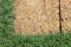 Laterite och gräsplanblad Arkivfoton