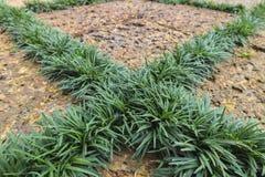 Laterite och gräsplanblad Arkivbild