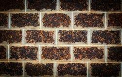 Laterite steenmuur Royalty-vrije Stock Fotografie