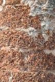 Laterite Stone στη φύση ως υπόβαθρο Στοκ Φωτογραφία