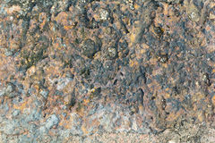 Laterite stone texture Royalty Free Stock Photography