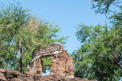 Laterite wall. Ancient ruins on a hill in the woods Royalty Free Stock Photos