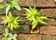 Laterite wall with plant. Laterite wall with little plant Stock Images