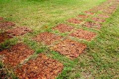 Lateritegångbanor på gräsmatta Royaltyfri Bild