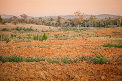 Lateritic soil Stock Photography