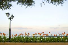 latern hav för blommagräsliggande Royaltyfria Bilder