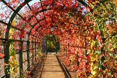 Laterne in den Herbstblättern Stockfoto
