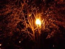 Laterne in der Nacht lizenzfreie stockfotografie
