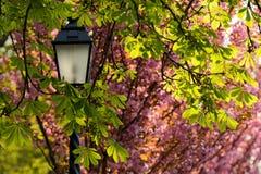 Laterne gegen Blüte und Laub Lizenzfreies Stockfoto