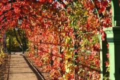 Laterne im Herbstlaub lizenzfreies stockbild